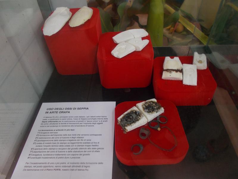 MuseoMalacologia_CupraMarittima_Part2_byAnnaBattista (61)
