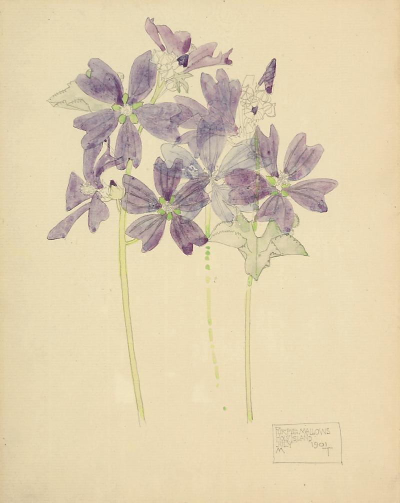 Purple Mallows  Holy Island_CharlesRennieMackintosh
