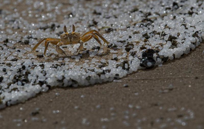 SriLanka_crab_nurdles