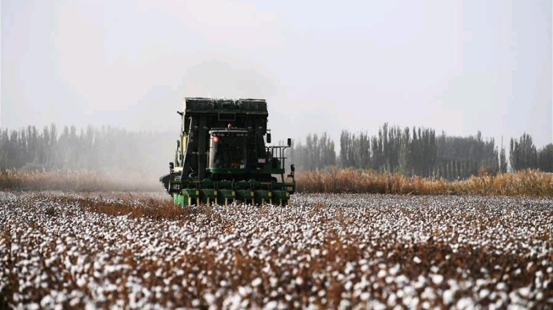 China_cotton