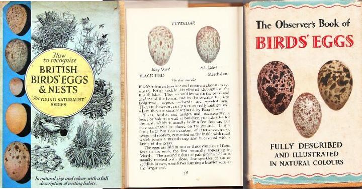 Books_BirdsEggs